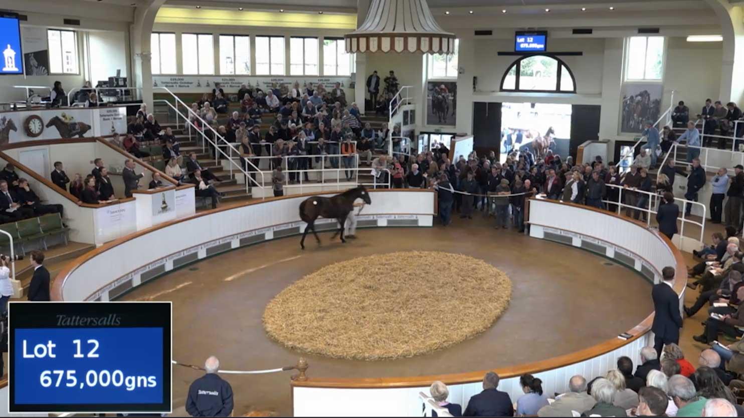 auction webcast company to stream horse parade newmarket film live facebook 360 vr